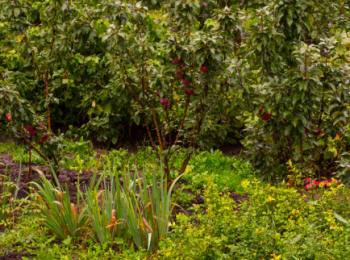 Сроки посадки кустов и деревьев в саду
